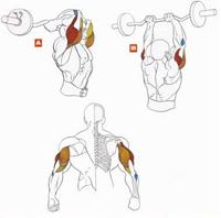 Упражнения на трицепс 2