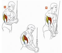 Упражнения на трицепс 5