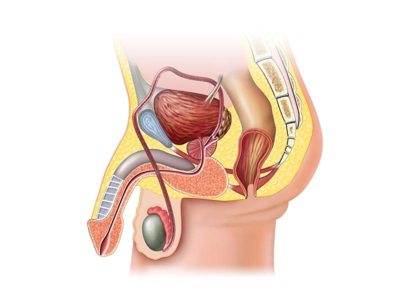 После эякуляции болят яички